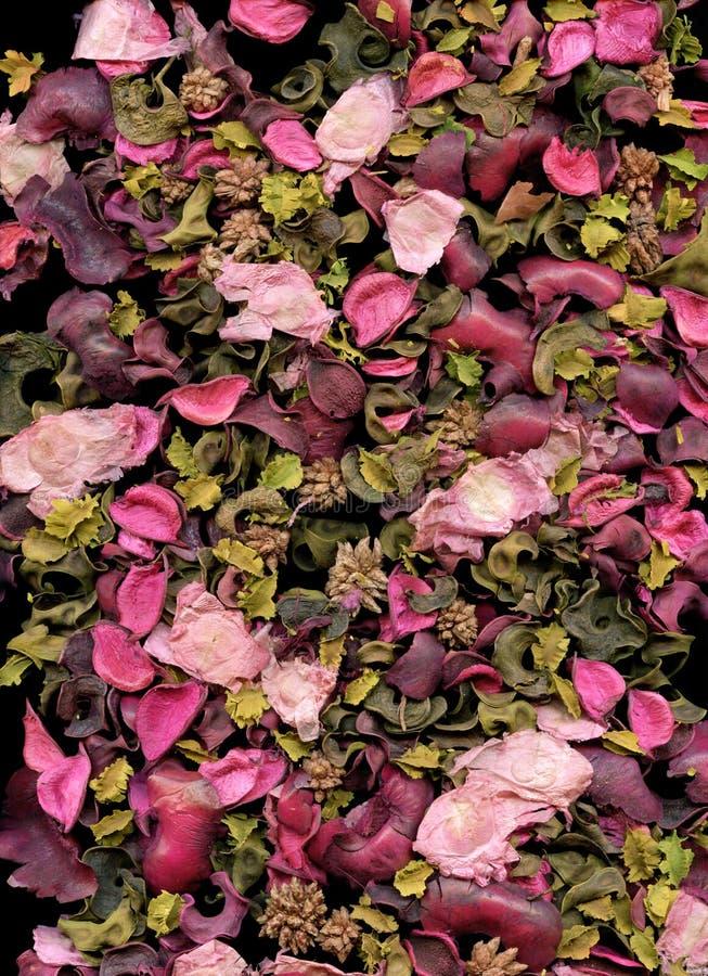 Priorità bassa dei petali di Rosa fotografia stock