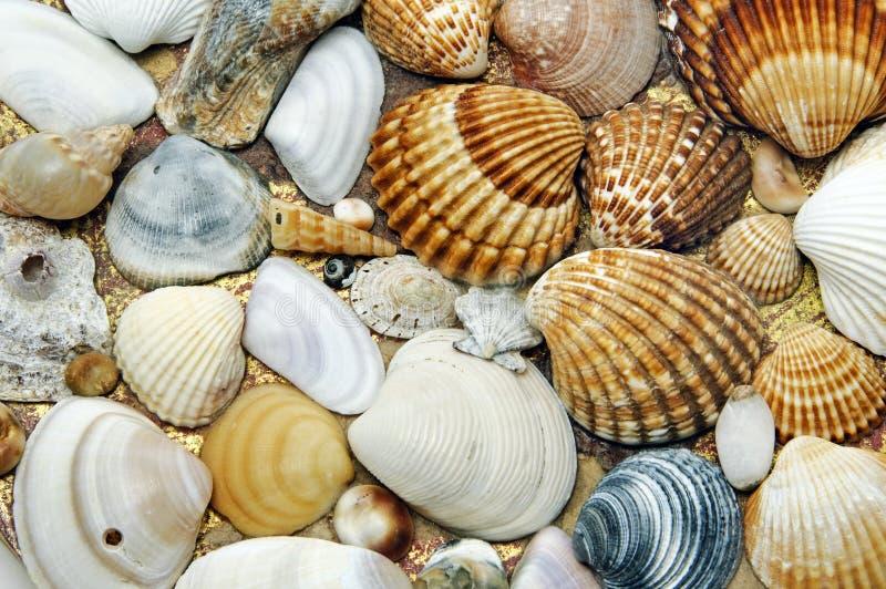 Priorità bassa dei Seashells fotografie stock libere da diritti