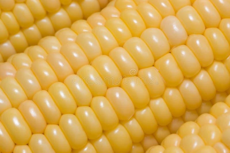 Priorità bassa del cereale fotografia stock