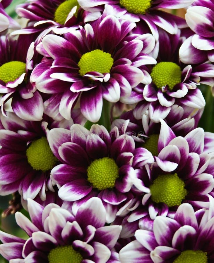 Download Priorità bassa del fiore immagine stock. Immagine di colorful - 3878699