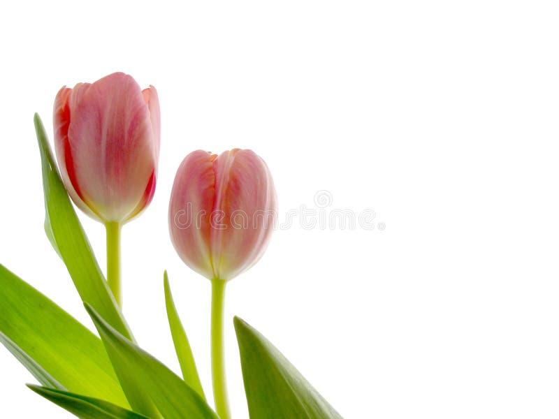 Priorità bassa del fiore fotografie stock libere da diritti