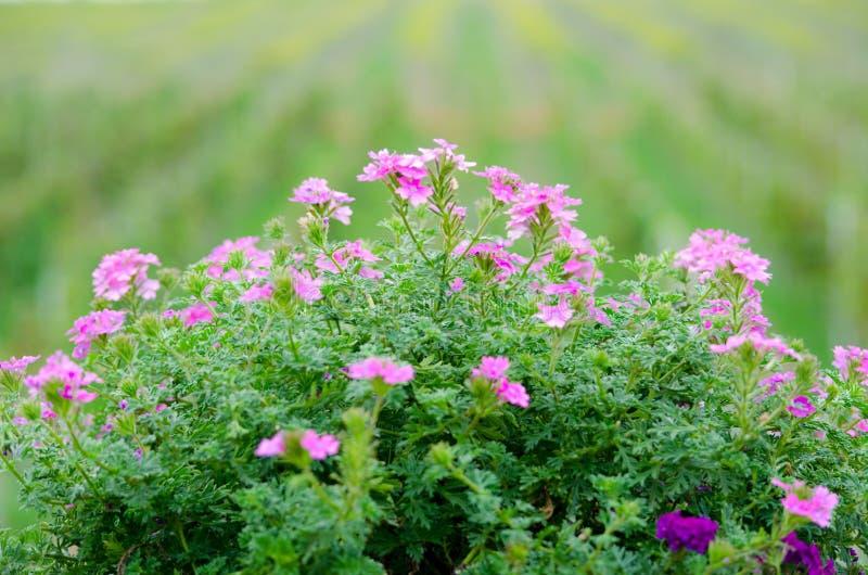 Priorità bassa del fiore immagini stock libere da diritti