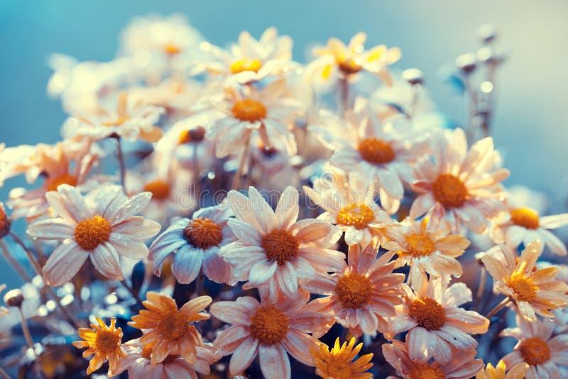 Priorità bassa del fiore dell'annata fotografia stock