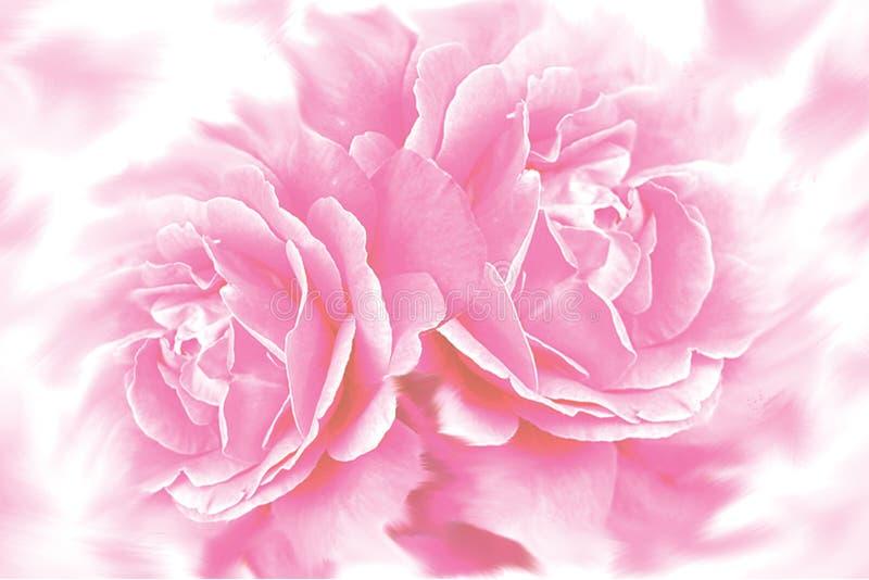 Priorità bassa del fiore della Rosa illustrazione di stock