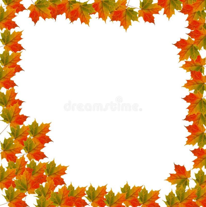 Priorità bassa del foglio del bordo per l'autunno illustrazione di stock