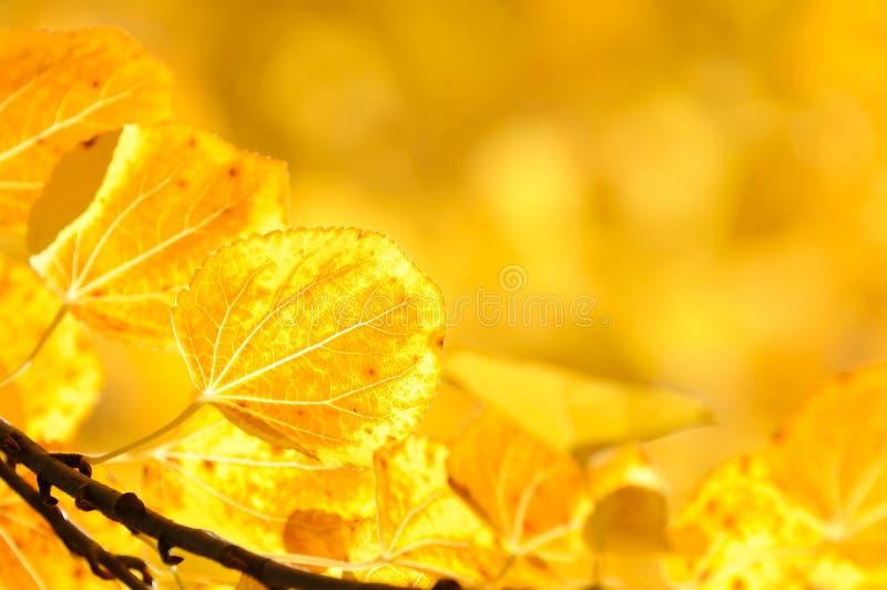 Priorità bassa del foglio di autunno immagini stock libere da diritti