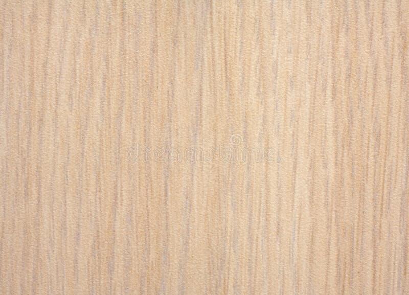 Priorità bassa del Formica della quercia immagini stock libere da diritti