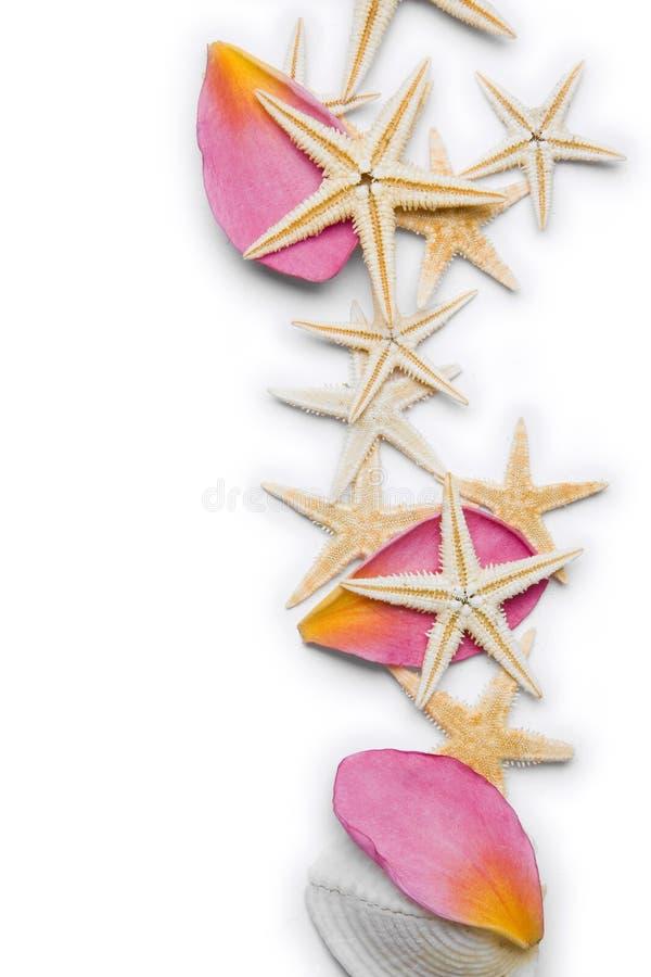 Priorità bassa del petalo e delle stelle marine immagine stock