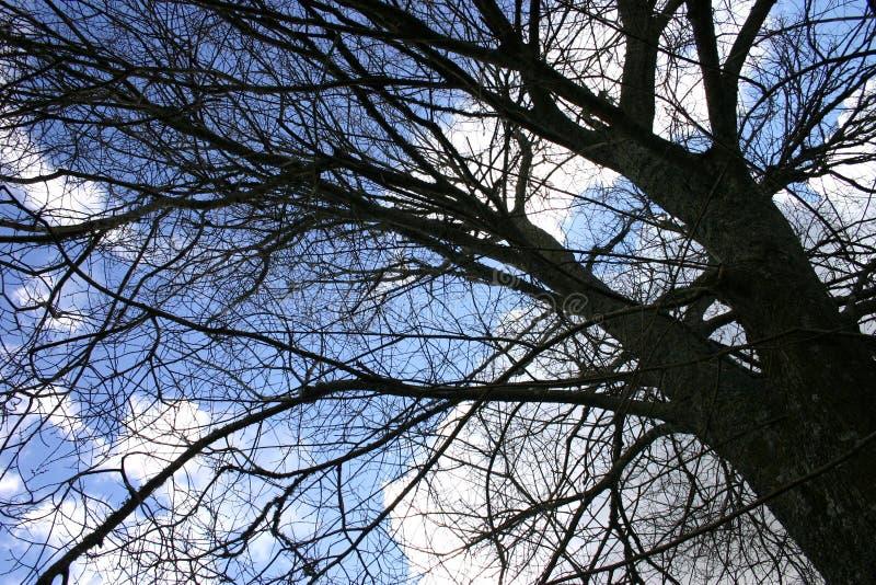 Download Priorità Bassa Dell'albero Di Inverno Fotografia Stock - Immagine di cielo, nubi: 214500