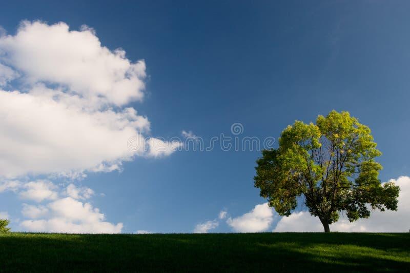 Priorità bassa dell'albero e del cielo fotografie stock libere da diritti