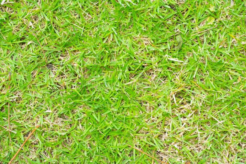Priorità bassa dell'erba fotografia stock
