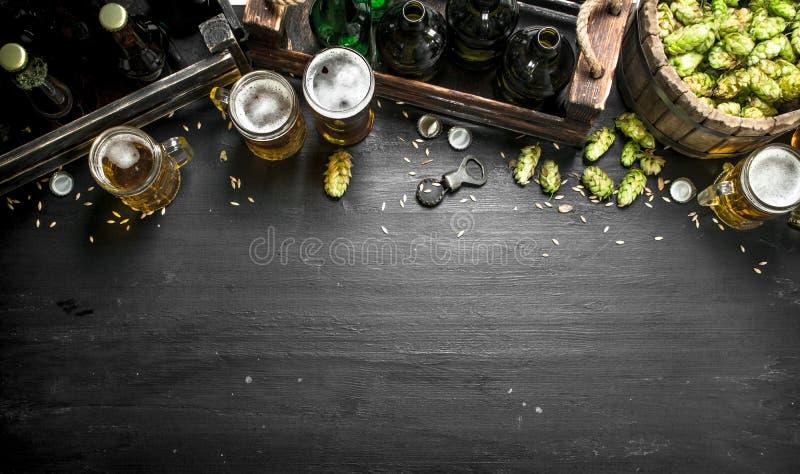 Priorità bassa della birra Birra ed ingredienti freschi fotografia stock libera da diritti