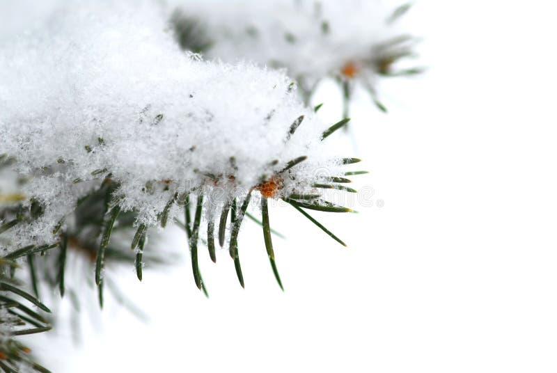 Priorità bassa della filiale dello Snowy fotografia stock libera da diritti