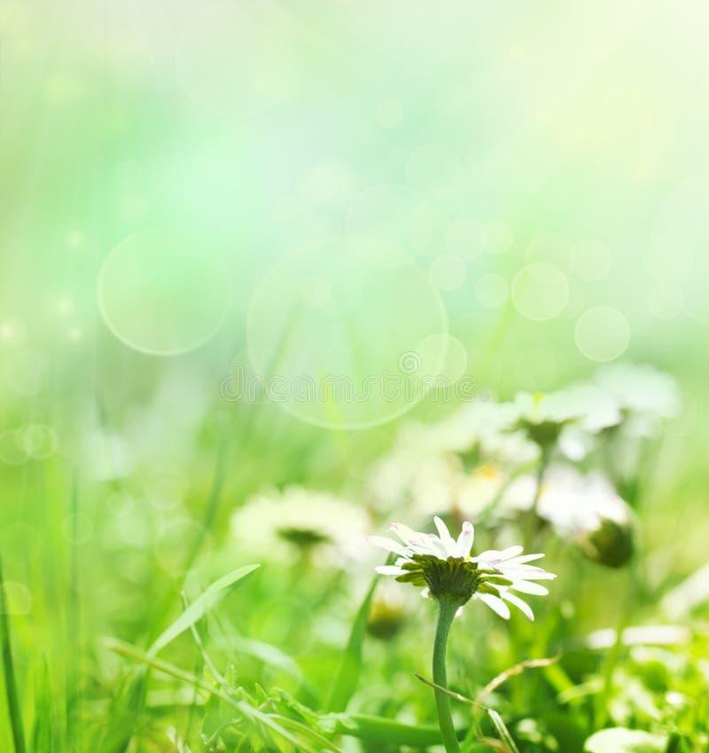 Priorità bassa della sorgente con i fiori fotografie stock libere da diritti