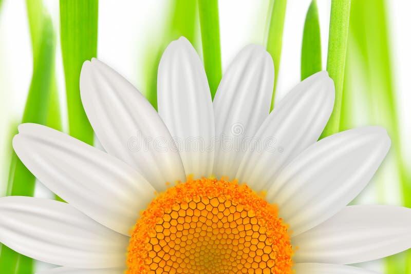 Priorità bassa della sorgente del fiore illustrazione vettoriale