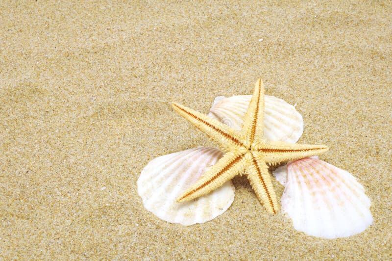 Priorità bassa della spiaggia immagini stock libere da diritti