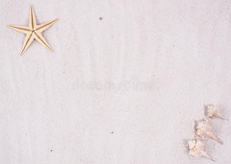 Priorità bassa della spiaggia di Sandy fotografia stock libera da diritti