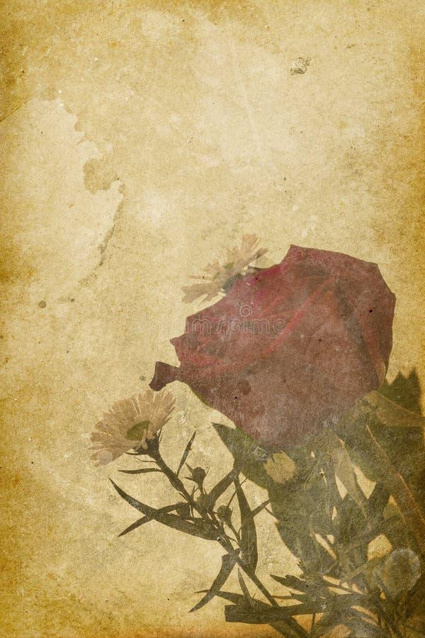 Priorità bassa della stampa della Rosa dell'annata fotografia stock