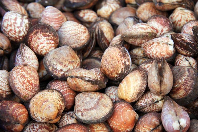 Priorità bassa delle coperture dei molluschi immagini stock libere da diritti