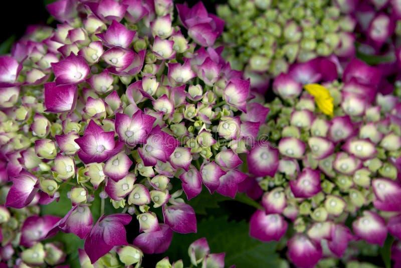 Priorità bassa dentellare del fiore immagini stock