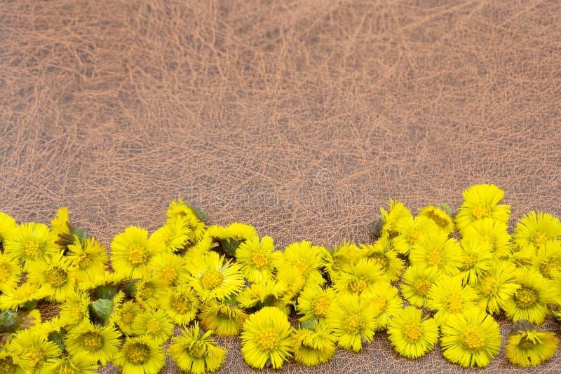 Priorità bassa di autunno Fiori su un fondo di legno marrone Posto per l'iscrizione Fondo per le feste di autunno ed il giorno di fotografia stock libera da diritti