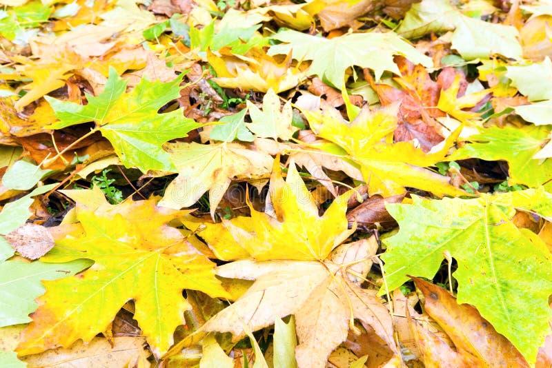 Priorità bassa di autunno (fogli abscissed colore giallo) fotografie stock libere da diritti