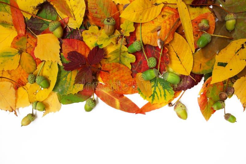 Priorità bassa di autunno foglie variopinte isolate su bianco fotografie stock