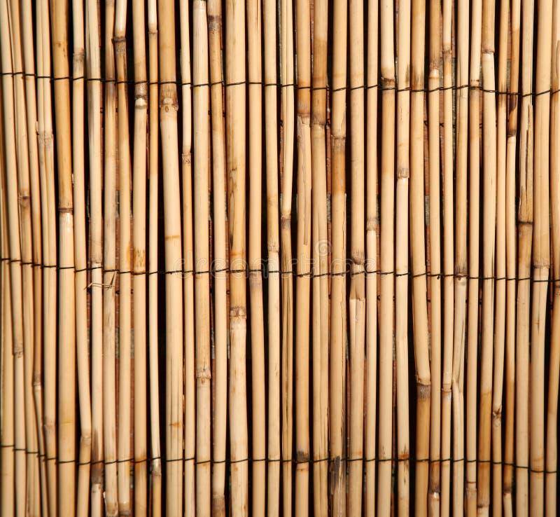 Priorità bassa di bambù del reticolo fotografie stock libere da diritti