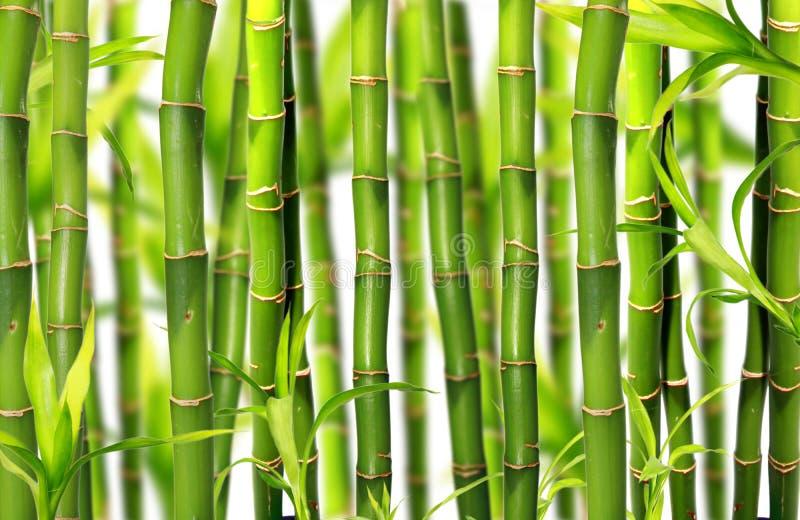 Priorità bassa di bambù della giungla fotografia stock