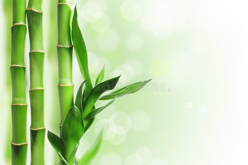 Priorità bassa di bambù verde fotografia stock libera da diritti