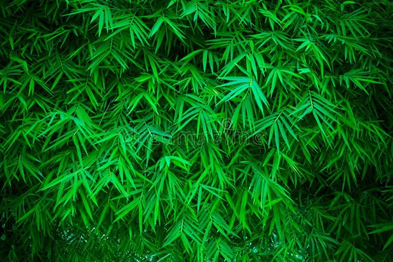Priorità bassa di bambù verde dei leavs immagini stock libere da diritti