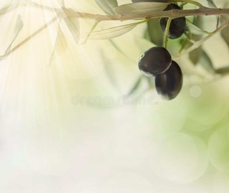 Priorità bassa di disegno delle olive immagini stock