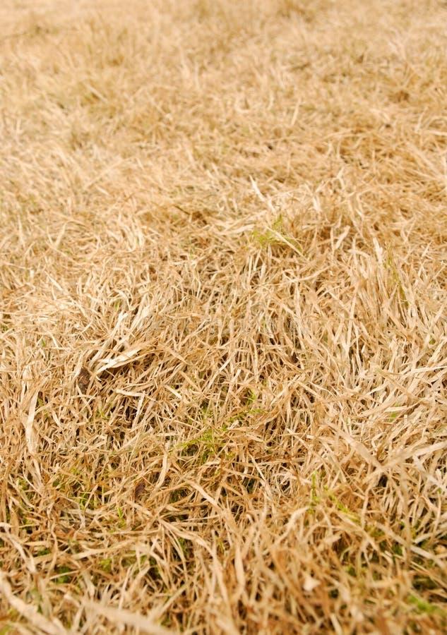 Priorità bassa di erba asciutta fotografia stock