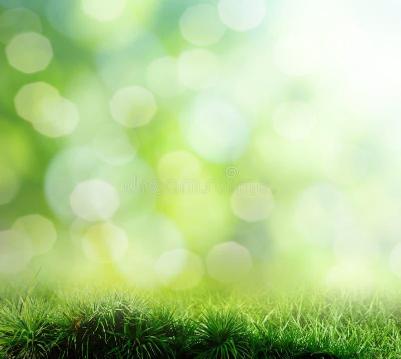 Priorità bassa di erba. bokeh fotografie stock