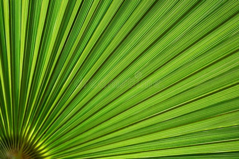 Priorità bassa di foglia di palma fotografia stock libera da diritti