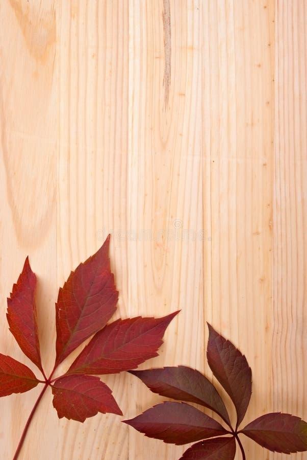 Priorità bassa di legno con i fogli fotografia stock libera da diritti