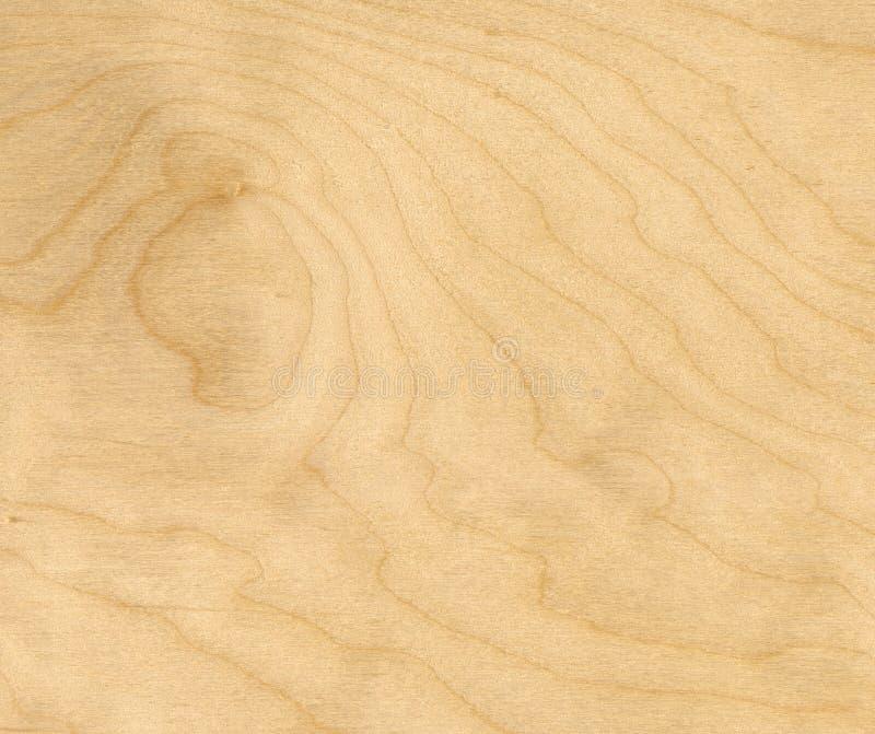 Priorità bassa di legno di betulla fotografia stock libera da diritti