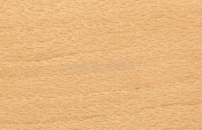 Priorità bassa di legno di faggio immagini stock libere da diritti