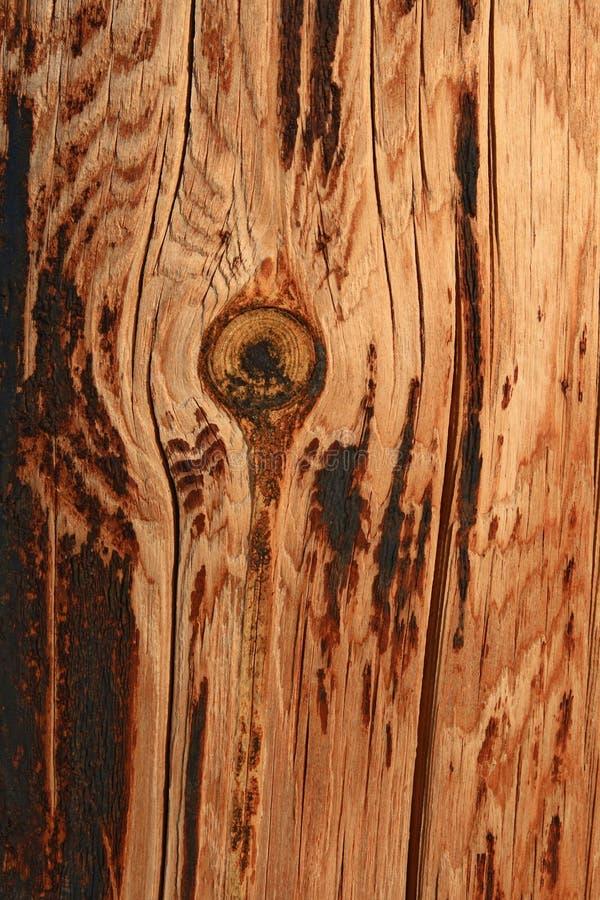 Priorità bassa di legno knotty bruciata fotografie stock libere da diritti