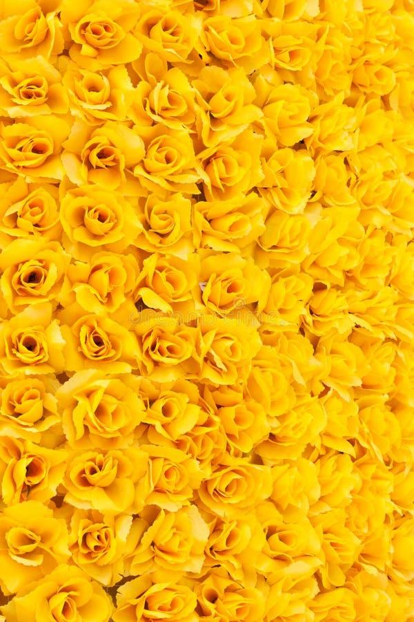 Priorità bassa di rosa di colore giallo fotografie stock libere da diritti