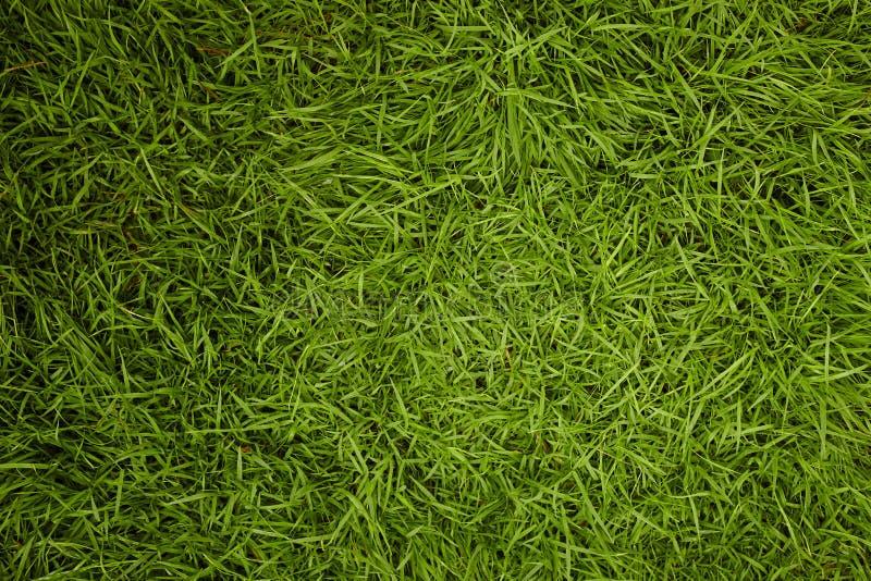 Priorità bassa di struttura dell'erba verde immagine stock libera da diritti