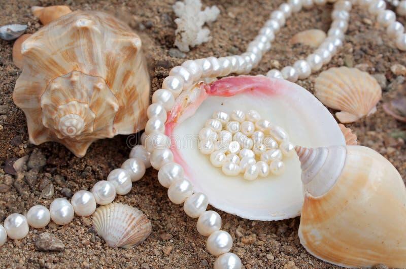 Priorità bassa elegante con le perle ed il cockleshell del mare fotografie stock libere da diritti