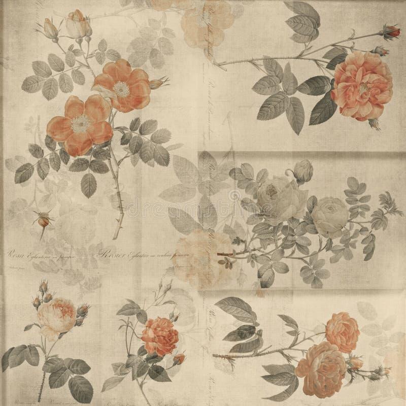 Priorità bassa elegante misera delle rose botaniche dell'annata royalty illustrazione gratis