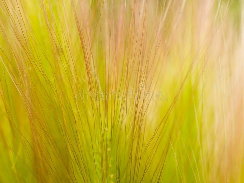 Priorità bassa floreale dell'erba fotografia stock libera da diritti
