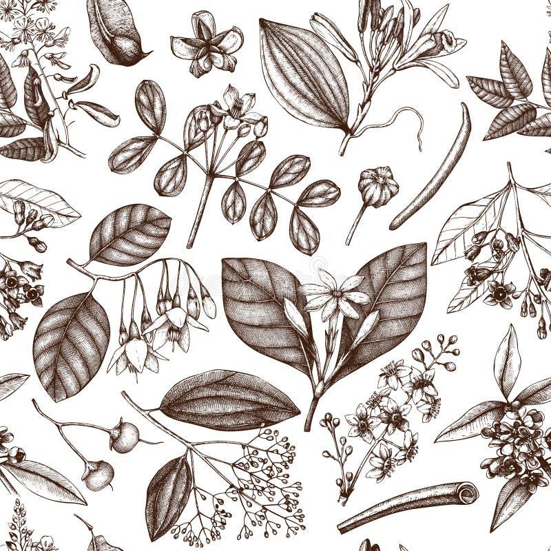 Priorità bassa floreale di vettore Illustrazione disegnata a mano degli ingredienti dei cosmetici e della profumeria Patte senza  illustrazione di stock
