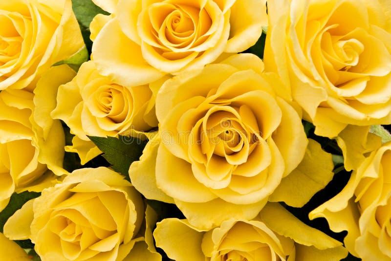 Priorità bassa gialla delle rose fotografie stock libere da diritti