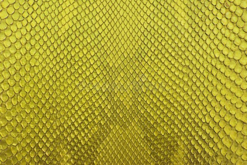 Priorità bassa gialla di struttura della pelle dello spuntino del pitone. fotografia stock