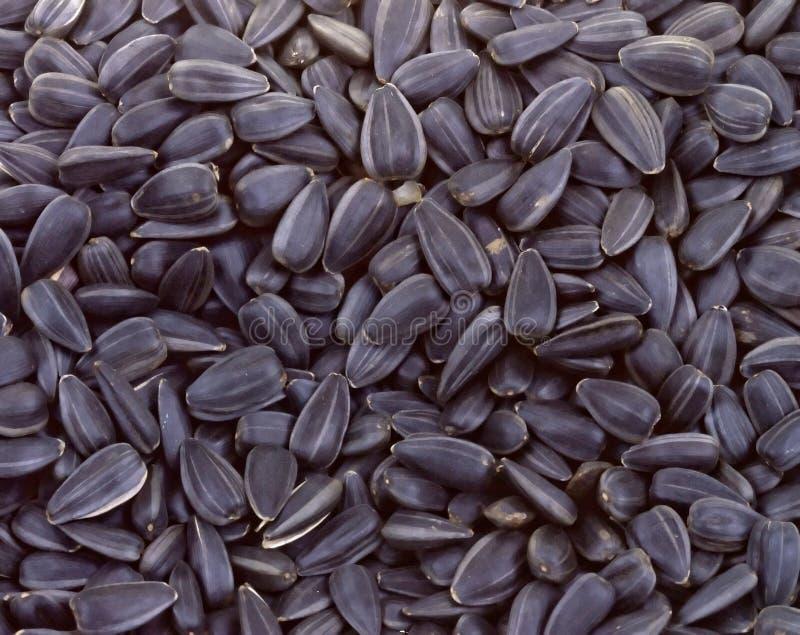 Priorità bassa grigia di struttura dei semi di girasole fotografia stock libera da diritti