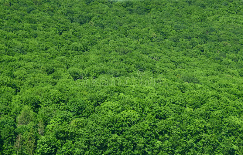 Priorità bassa Luscious della foresta pluviale fotografie stock