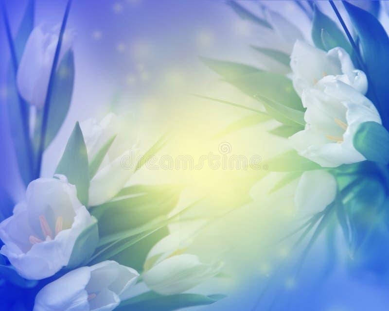 Priorità bassa piena di sole dei tulipani royalty illustrazione gratis